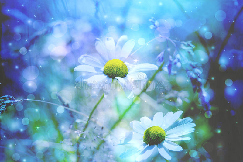 Beautiful Artistic Background With Meadow Of Daisies Stock ...