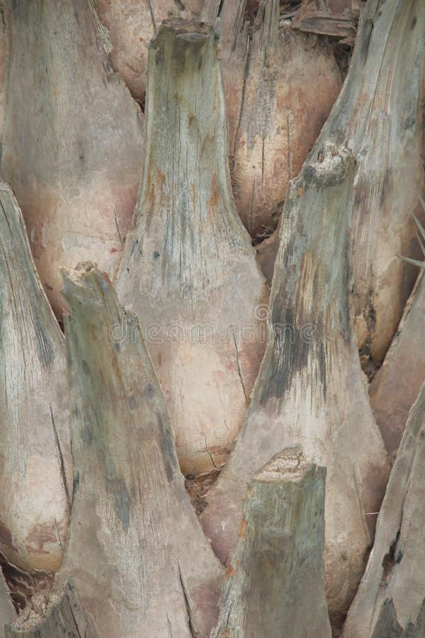 Artistic texture of the tree bark. stock image