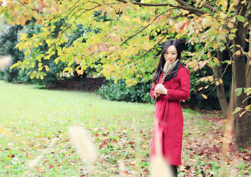 Beautiful Asian woman in autumn park stock photos