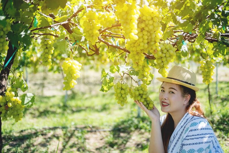 Beautiful asian woman hold ripe juicy of green grape in her hand stock photos