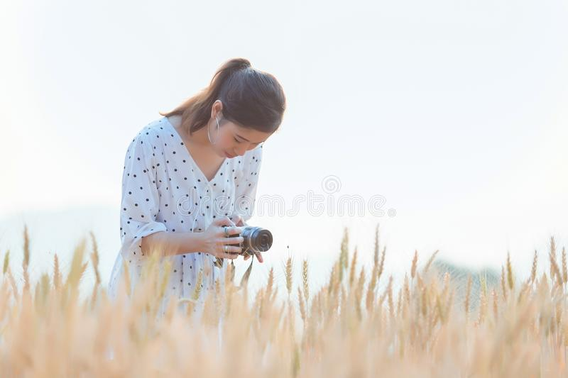 Beautiful asian woman taking photo and relaxing at barley field in summer on sunset time stock photography