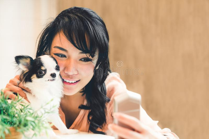 Beautiful Asian woman taking selfie with cute Chihuahua dog at home, with copy space. Lovely human and pet friendship stock photos
