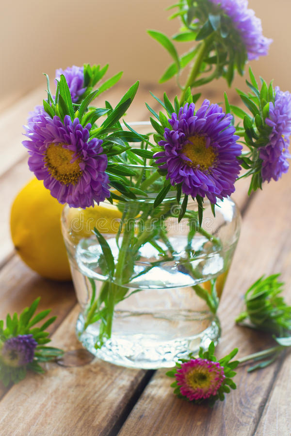 Beautiful aster flower bouquet royalty free stock photography