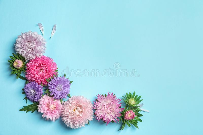 Beautiful aster flowers on color background, top view royalty free stock photography