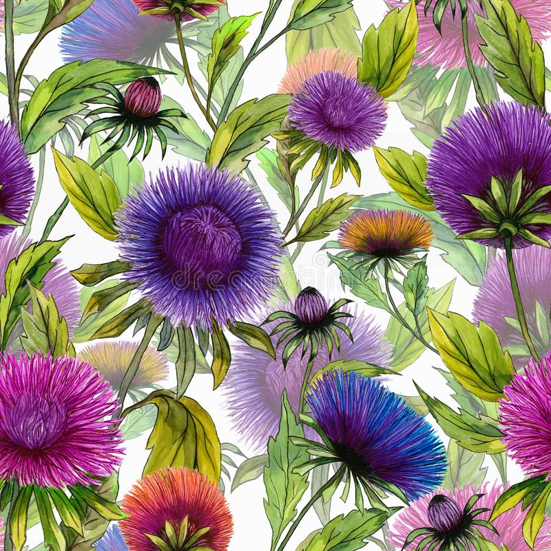 Beautiful aster flowers in different bright colors with green leaves on white background. Seamless floral summer pattern. royalty free illustration