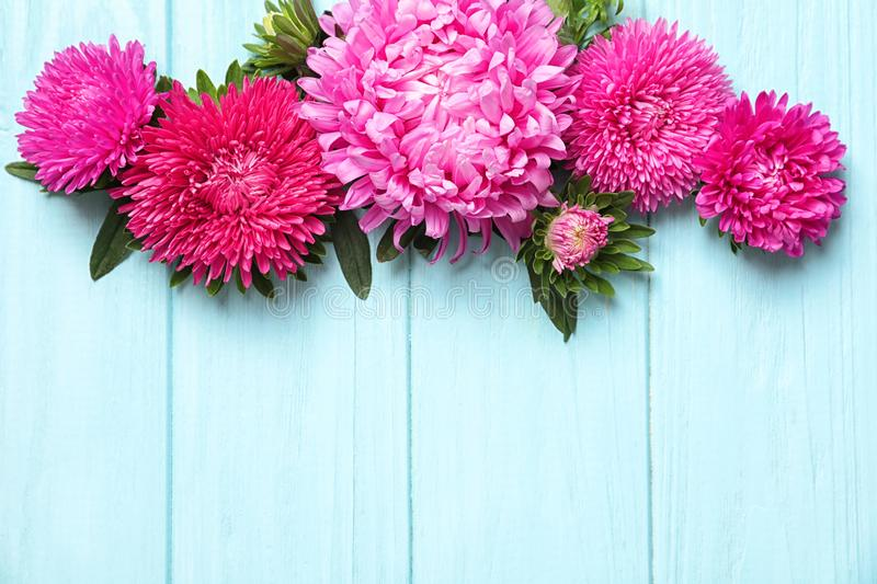 Beautiful aster flowers and space for text on wooden background royalty free stock photos