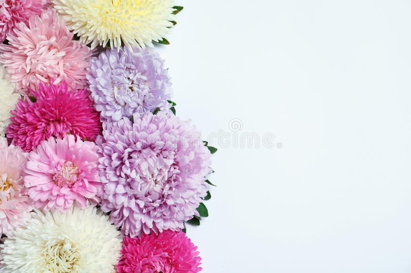 Beautiful aster flowers on white background, top view stock photo