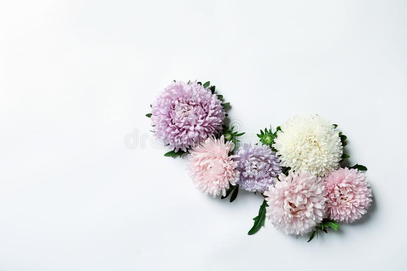 Beautiful aster flowers on white background, top view royalty free stock photo