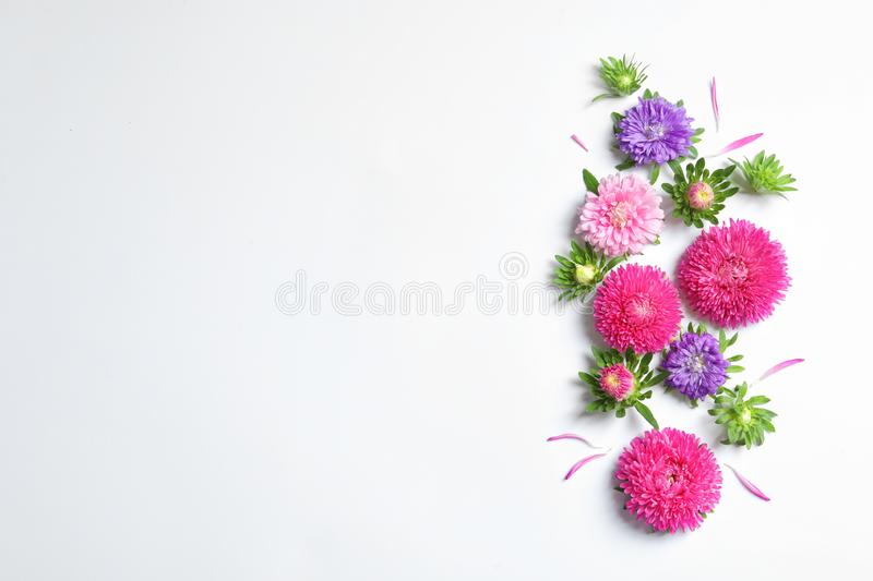 Beautiful aster flowers on white background top view. Space for text. Beautiful aster flowers on white background, top view. Space for text royalty free stock image