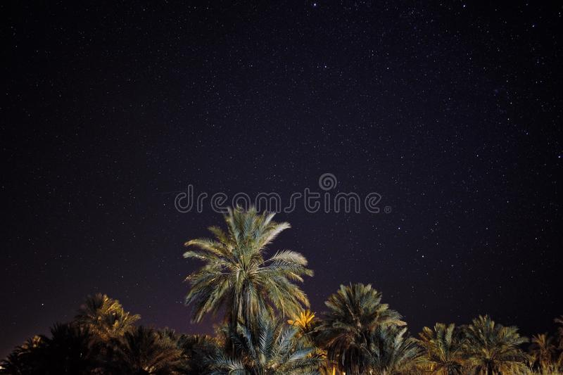 A beautiful astrophotography with palm trees in the foreground royalty free stock photography