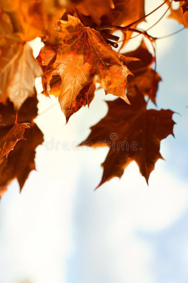 Free Beautiful Autum Leaves Against Sky Stock Images - 6251084