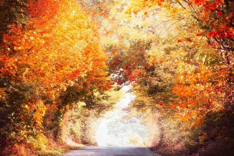 Beautiful autumn alley landscape with colorful fall foliage of trees and sunlight, fall outdoor nature. In park or country stock image