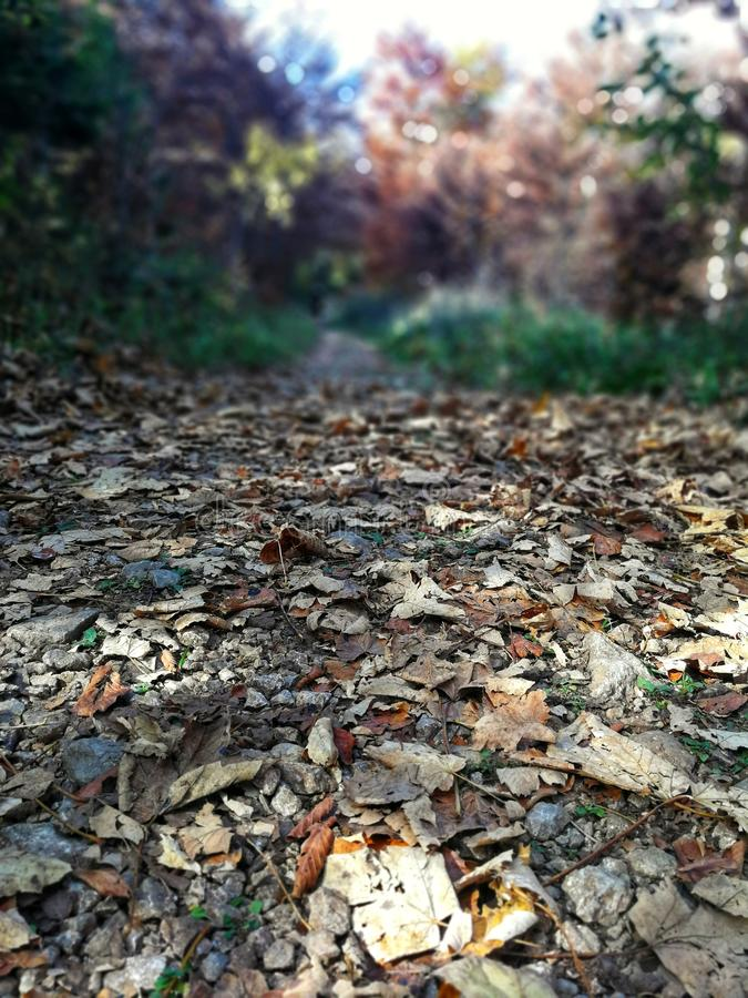 Beautiful autumn at Bjelasnica,The path covered with leaves. Beautiful autumn at Bjelasnica.Autumn in the woods, a relaxing walk.The path covered with leaves stock photography
