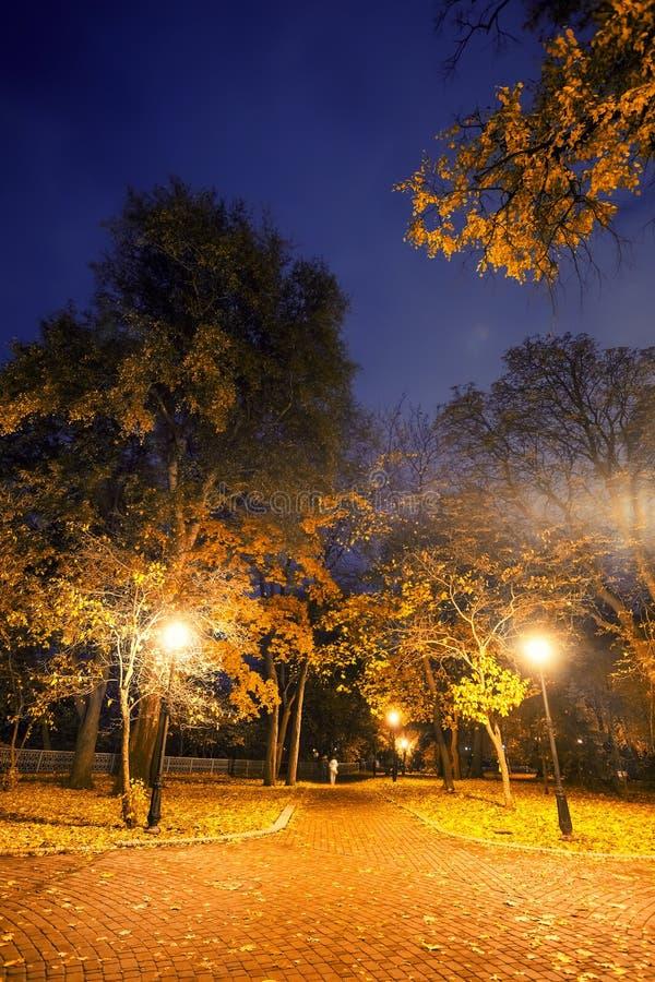 Beautiful autumn city park at night. Tonal photo filter correction royalty free stock images