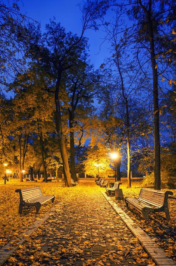 Beautiful autumn city park at night. Tonal photo filter correction stock images