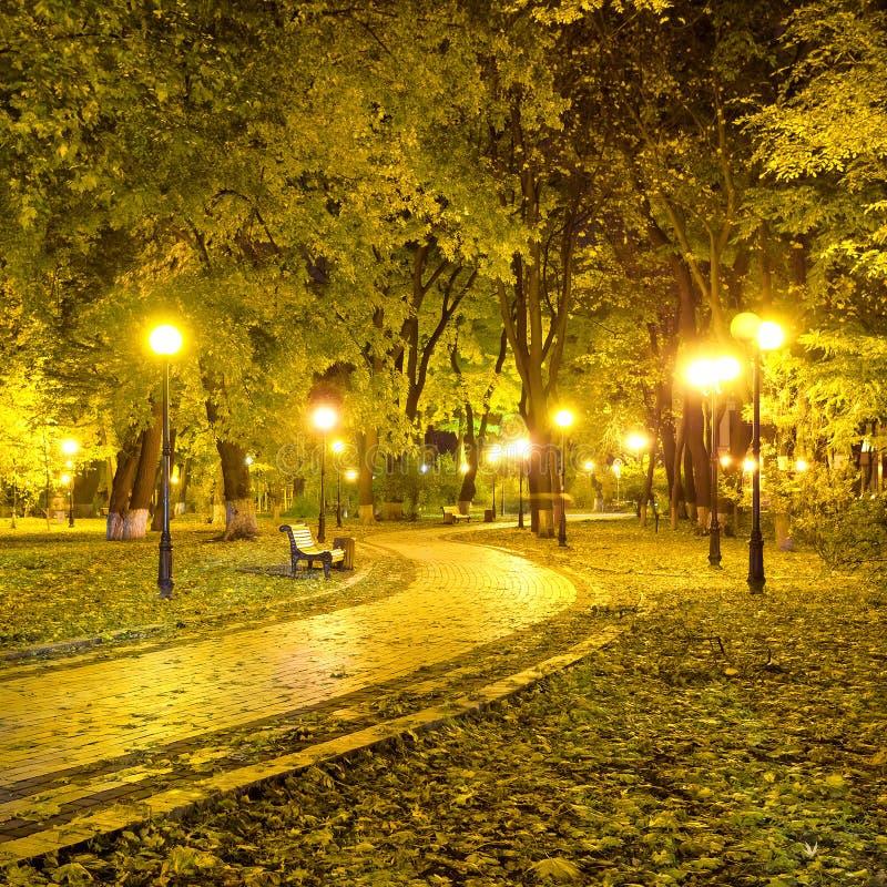 Beautiful autumn city park at night. Tonal photo filter correction royalty free stock image