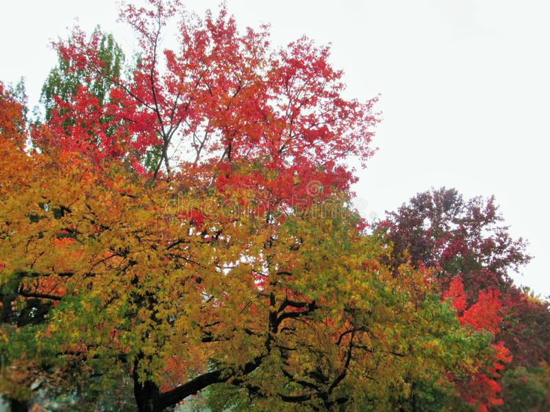 Beautiful Autumn Colorful Leaves And Trees Scenery In Urban Vancouver 2019. Beautiful Bright Autumn Colorful Of Red, Yellow, Green, Orange  Leaves And Trees royalty free stock photos