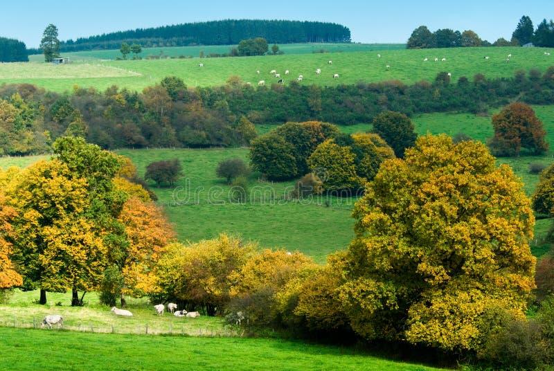 Beautiful autumn country stock photo