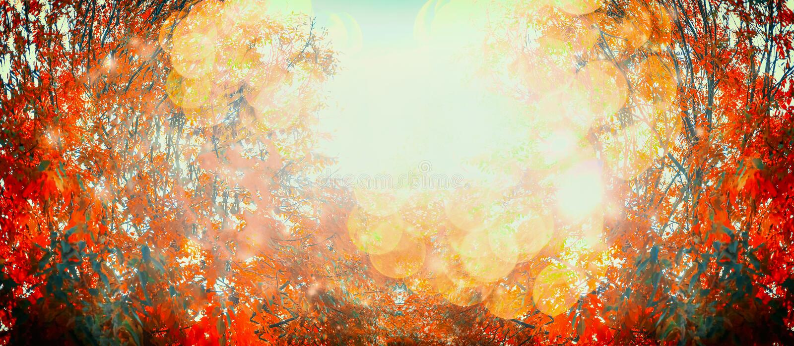 Beautiful autumn day with red fall foliage and sunlight, outdoor nature background, banner stock image