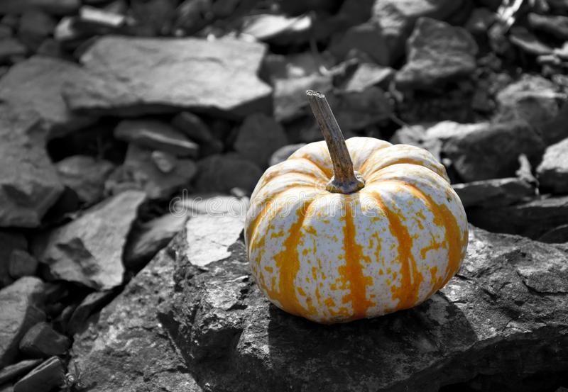 Decorative pumpkin in the garden stock images royalty free stock image