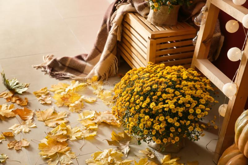 Beautiful autumn decorations in room royalty free stock photo
