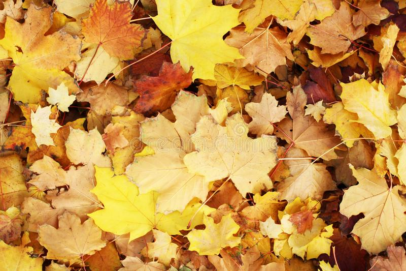 Download Beautiful Autumn Fall Leaf Leaves Texture Background Yellow Brown Vibrant Colorful Pattern Closeup