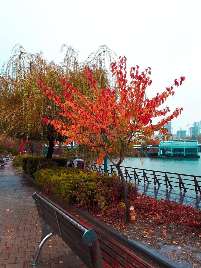 a beautiful autumn stock images