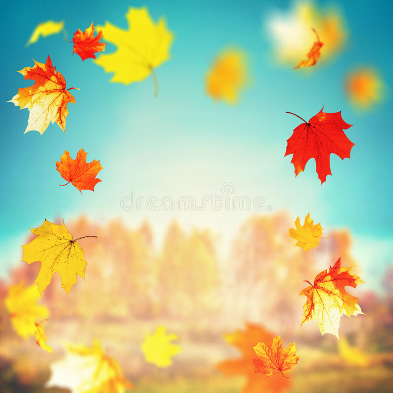 Beautiful autumn falling leaves on sunny day at trees and grass landscape and sky background, outdoor fall nature stock photo