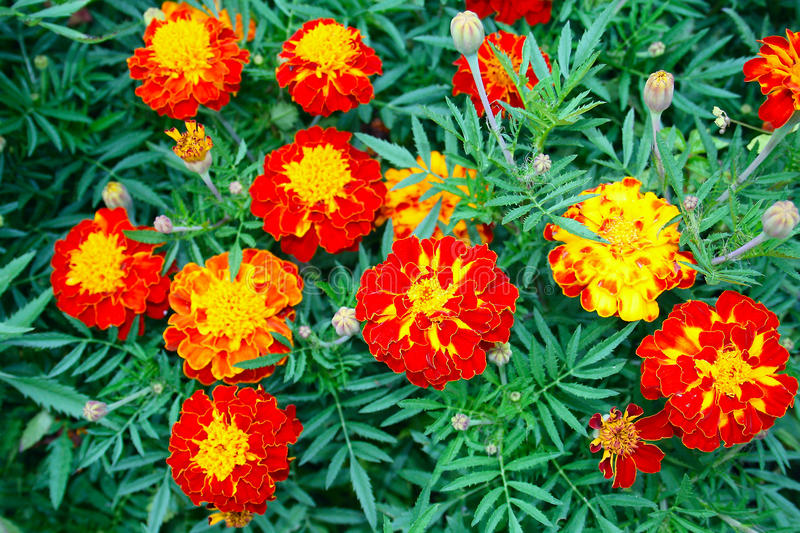 Beautiful autumn flowers stock image