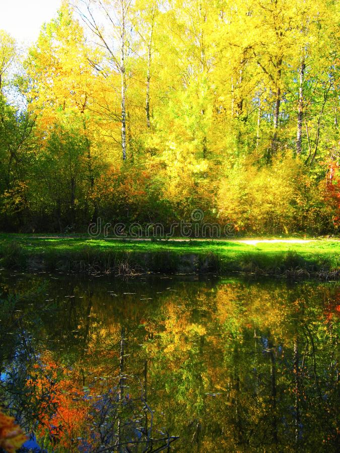 The beautiful autumn forest in bright yellow colors. View of the beautiful autumn forest in bright yellow colors with lake stock images