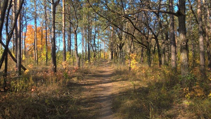 Beautiful autumn forest in the city of Togliatti, Samara region. Красивый осенний лес в городе Тольятти, Самарская область royalty free stock photography