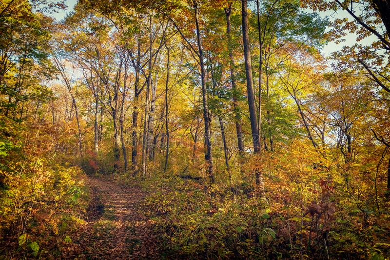 Beautiful autumn forest with colorful trees. And a narrow path stock image