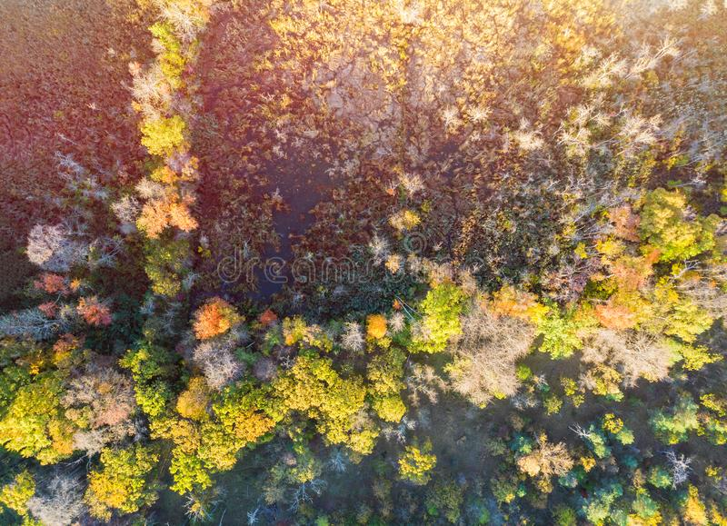 Beautiful autumn forest with yellow and red trees aerial top view stock photo
