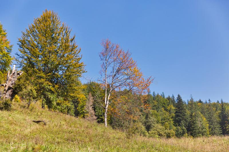 Beautiful autumn forest landscape in the Carpathian mountains stock photo
