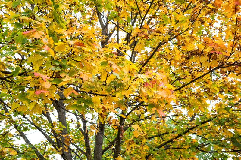 Beautiful autumn forest landscape Fall park stock images