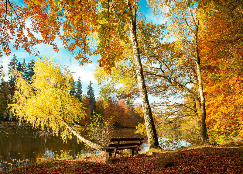 Beautiful autumn forest landscape. Fall in park royalty free stock image