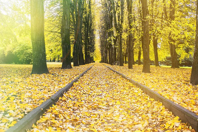 Beautiful autumn forest in the Park. Autumn time. Indian summer royalty free stock image