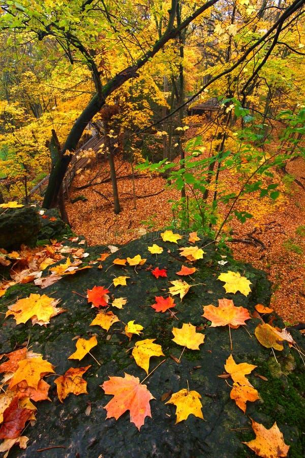 Beautiful Autumn Illinois Landscape Royalty Free Stock Images