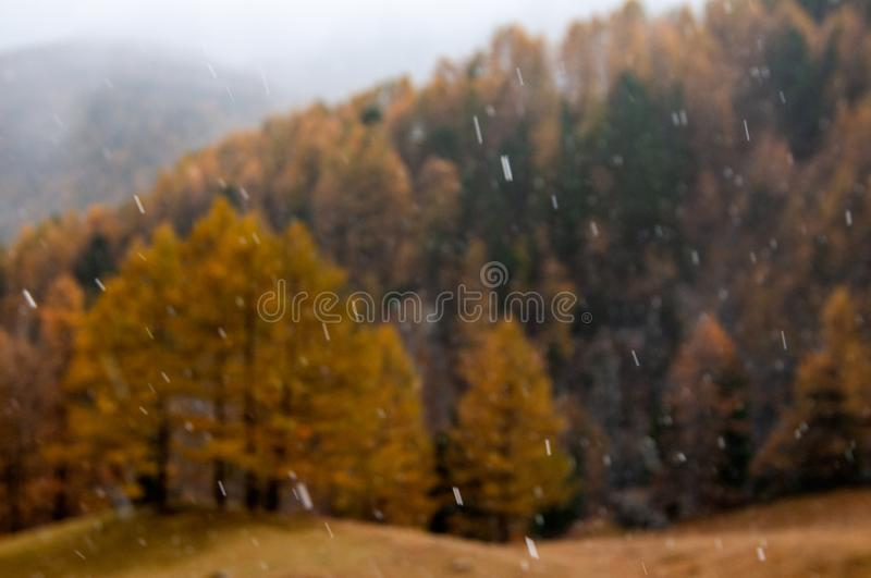 Beautiful autumn landscape with first snow falling on a forest background royalty free stock images