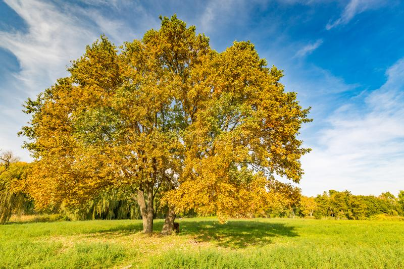 Beautiful landscape with magic autumn trees and fallen leaves in the mountains stock photography
