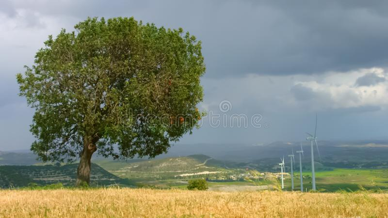 Beautiful autumn landscape, lonely tree under cloudy sky, wind turbines rotating stock image