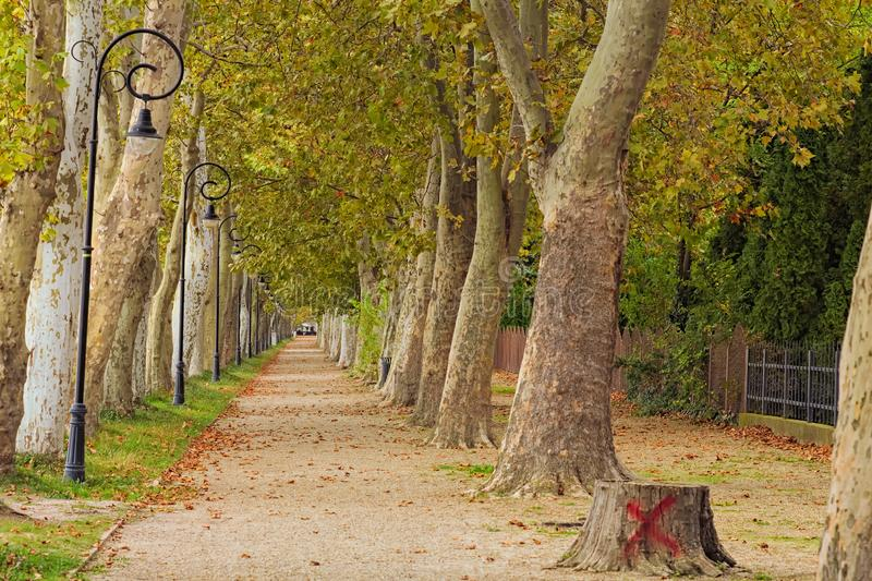 Beautiful autumn landscape photo of famous Plane-tree alley. Famous touristic place and romantic travel destination. royalty free stock photo