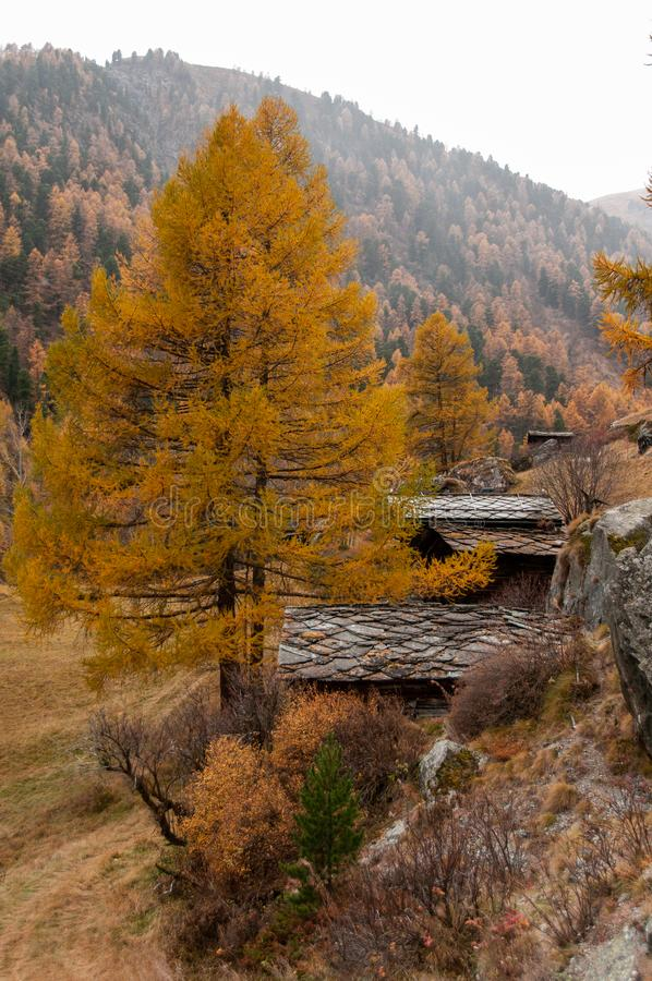Beautiful autumn landscape with some old swiss chalets in Zermatt area stock photo