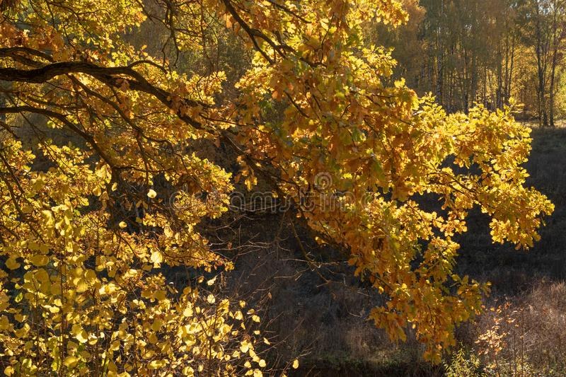 Autumn landscape with tree brunch and foliage royalty free stock images