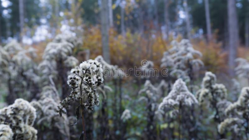 Beautiful autumn landscape with trees and flowers. Colorful foliage in the forest. stock photos