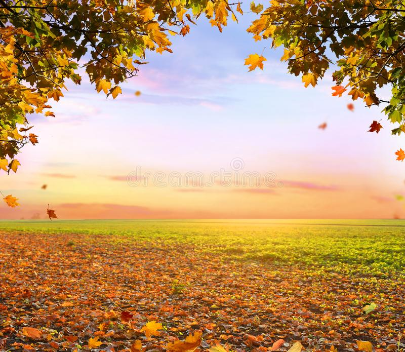 Beautiful autumn landscape with trees and sun. Colorful foliage royalty free stock photography