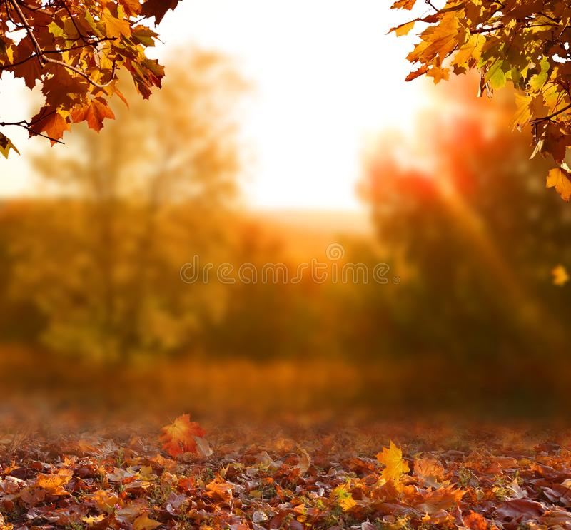 Beautiful autumn landscape with  trees, and sun. Colorful foliage ihe park. Falling leaves natural backgroundn t. Beautiful autumn landscape with yellow trees stock photos