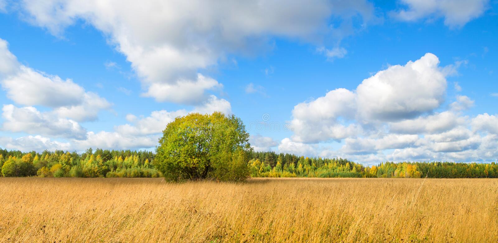 Beautiful autumn landscape with white clouds. Rural place royalty free stock photos