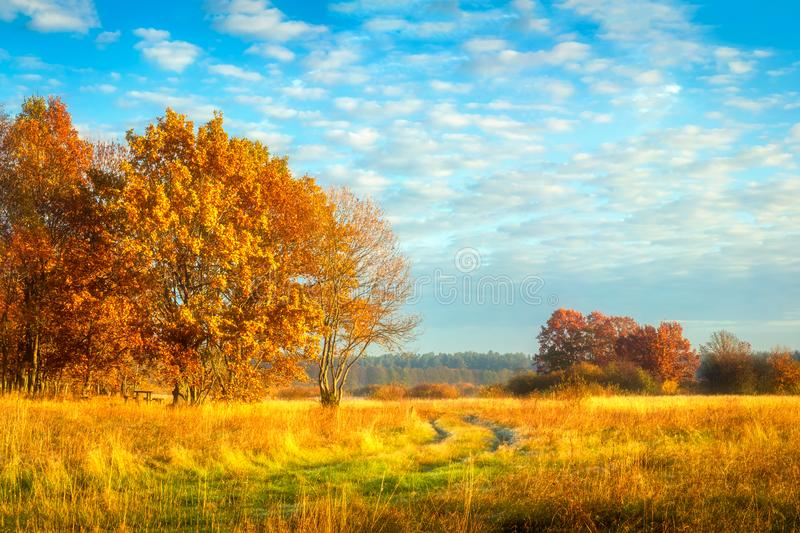 Beautiful autumn landscape. Yellow foliage on trees.  Fall. Autumnal meadow with colorful trees. Beautiful autumn nature landscape. Yellow foliage on trees royalty free stock images