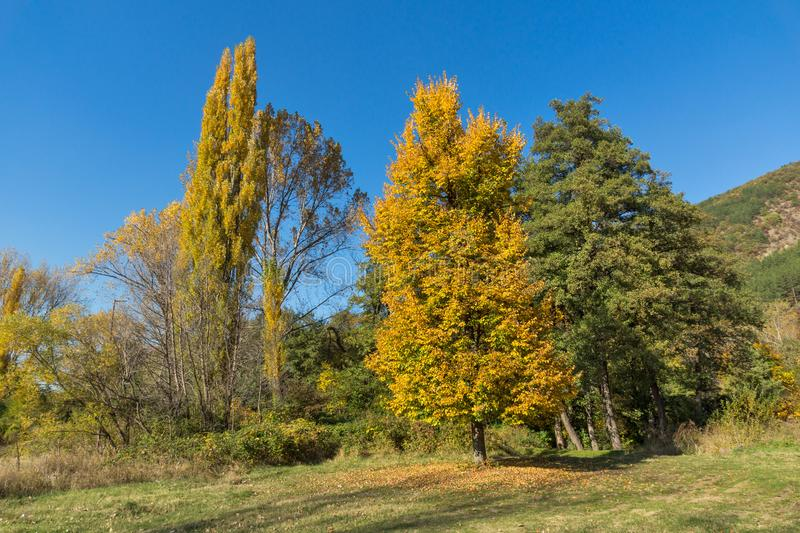 Autumn Landscape with yellow tree near Pancharevo lake, Sofia city Region, Bulgaria royalty free stock photos